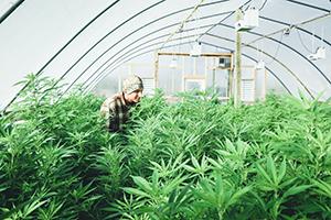 Cannabis-indoor-farmer